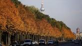 Tak cuma di pinggiran kota, nuansa musim gugur juga terasa di sepanjang jalanan Berlin, Jerman, salah satunya di Taman Tiergarten. (REUTERS/Fabrizio Bensch)