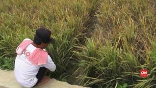 Masalah Penguasaan Lahan Hambat Kesejahteraan Petani