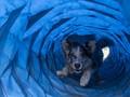 Studi: Anjing Bisa 'Lacak' Penyakit Malaria