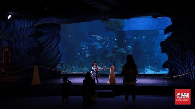 Di Jakarta Aquarium pengunjung juga bisa melihat pertunjukan memberi makan ikan.