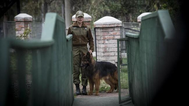 Anjing disebut-sebut sebagai salah satu hewan 'cerdas'. Dengan kecerdasannya, anjing kerap membantu aparat kepolisian dalam bertugas. (Photo by Martin BERNETTI/AFP)