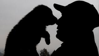 China Latih Anjing Polisi Terbaik Hasil Kloning