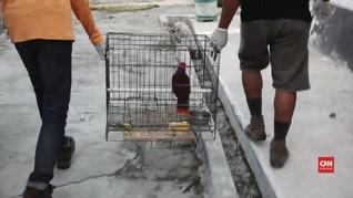 VIDEO: Satwa Langka dari Kawasan Bencana Palu Dievakuasi