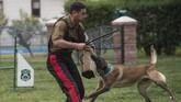 Anjing-anjing itu dilatih untuk hal-hal spesifik, mulai dari kemampuan mengendus obat-obat terlarang, mendeteksi bom, dan menjaga perbatasan. (Photo by Martin BERNETTI/AFP)