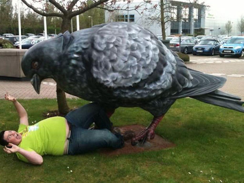 Tolong! ada burung dara raksasa. (Foto: Brightside)