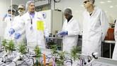 Namun, para siswa dilarang untuk memanfaat produk mereka. Tanaman-tanaman itu harus dihancurkan pada akhir masa belajar. (REUTERS/Carlos Osorio)