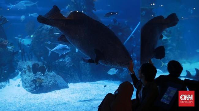 Ikan Kerapu dengan berat 300 Kg menjadi daya tarik tersendiri untuk pengunjung.
