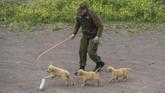 Kepolisian Chili membentuk sekolah khusus untuk melatih kemampuan anjing sejak dini. (Photo by Martin BERNETTI/AFP)