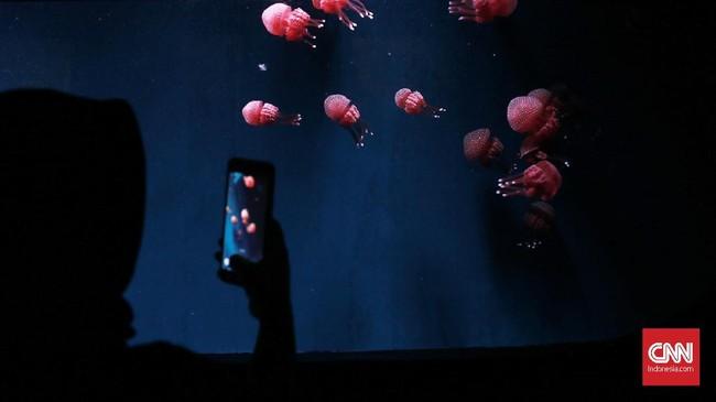 Pengunjung bisa menikmati jenis hewan laut yang beragam, sepeti ubur-ubur laut.