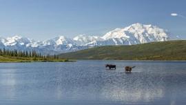 Suguhan Alam Alaska Selain Wisata Salju