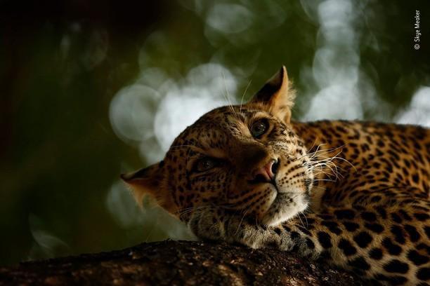 Karya Jawara Wildlife Photographer 2018 yang Bikin Mata Terpukau