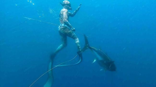 Ryder Devoe, 19, sembari menyelam bebas menangkap ikan tuna bluefin seberat 90 kilogram di perairan San Diego, California, Amerika Serikat. (REUTERS/Don Orr)