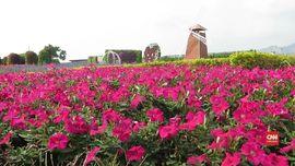 VIDEO: Keindahan Taman Bunga Chung She Flower Taiwan