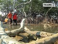 VIDEO: Tiram dan Kepiting dari Tanjung Barru
