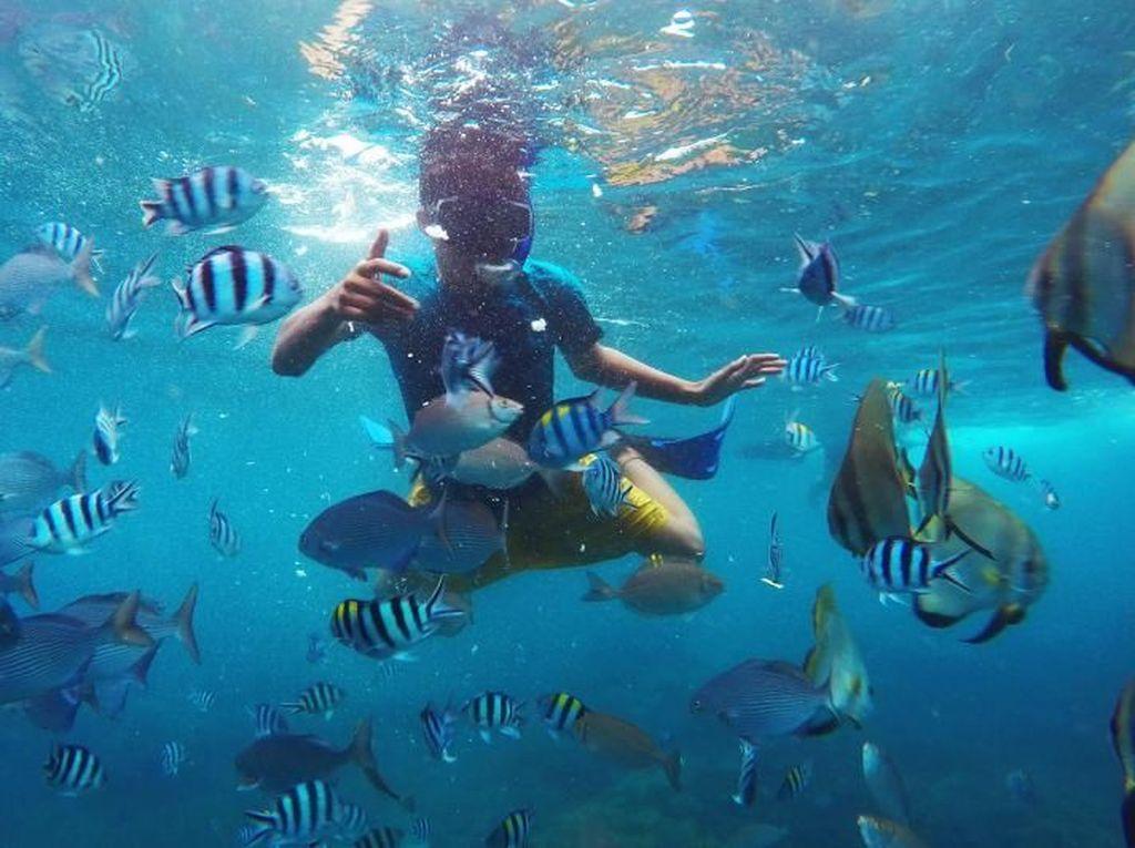 Cuma di Banyuwangi, Snorkelingnya di Rumah Apung
