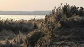 Suhu hangat dan kelembapan tinggi di pesisir Yunani membantu menciptakan kondisi yang cocok untuk laba-laba tetragnatha.