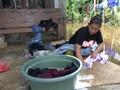 VIDEO: Aceh Barat Krisis Air Bersih karena Banjir