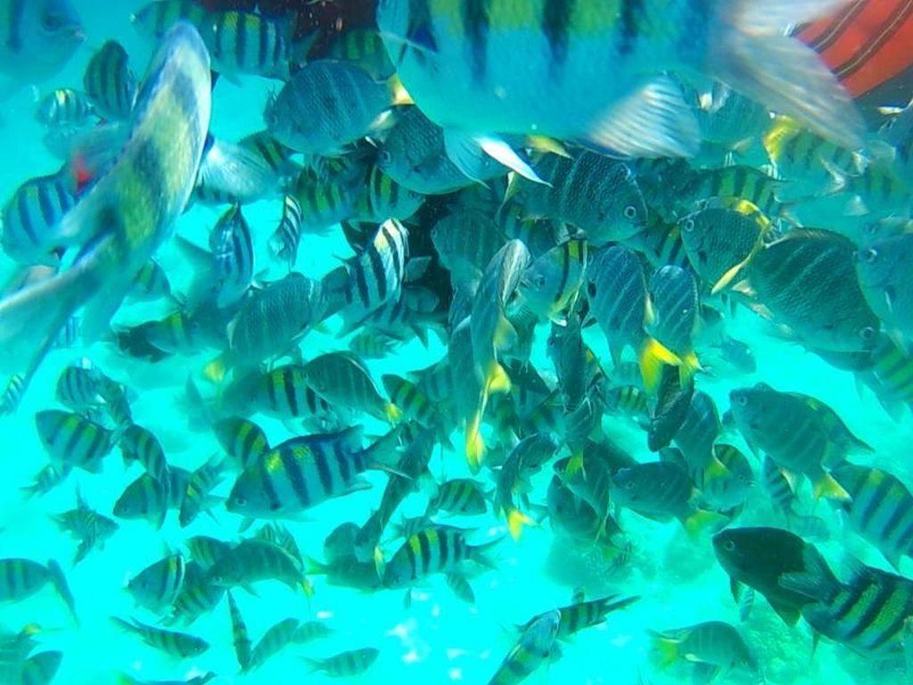 Pulau Rubiah, Surganya Ikan!
