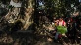Desa kecil yang di Kabupaten Karanganyar, Jawa Tengah itu terletak diantara perbukitan kaki Gunung Lawu dan merupakan sentra penghasil tanaman hias yang telah tersohor dan telah dikenal banyak orang.
