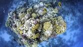 Ras Mohammad menjadi julukan atas kawasan ini karena medannya menyerupai bentuk kepala. Ada sekitar 220 jenis terumbu karang yang berhabitat di sini. Untuk menjangkaunya juga tak perlu menyelam terlalu dalam.