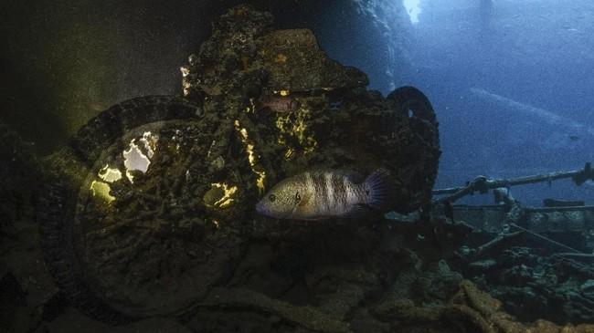 Selain area South Bereika, Marsa Ghozlani, Old Quay, dan Shark Observatory, bangkai kapal SS Thistlegorm juga jadi titik selam populer.