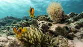 Egyptian Environmental Affairs Agency (EEAA) menetapkan Taman Nasional Ras Mohammad sebagai kawasan bahari yang terlindungi sejak tahun 1983.
