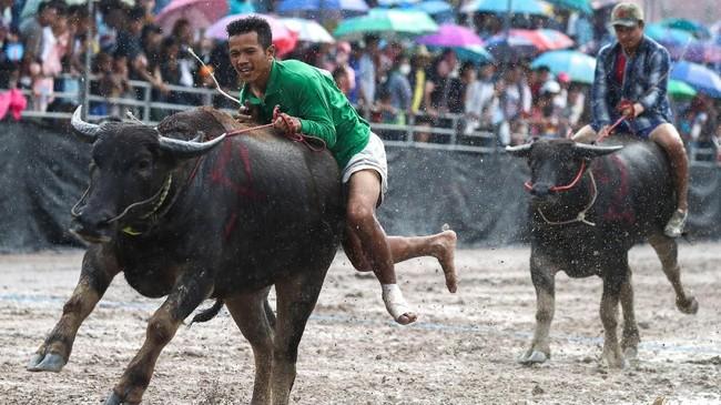 Selayaknya karapan sapi di Indonesia, budaya ini juga dilakukan di tengah tanah lapang. (REUTERS/Athit Perawongmetha)