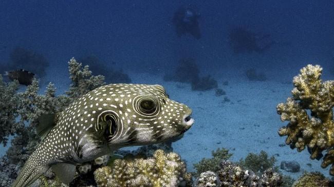 Taman Nasional Ras Mohammad menjadi kawasan bahari yang terlindungi dari segala aktivitas pemancingan dan pembangunan massif, karena kawasan ini merupakan habitat makhluk laut dan terumbu karang di Mesir.