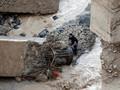 Banjir Bandang di Yordania, 14 Anak Sekolah dan Guru Tewas