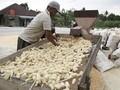 Kementan Siapkan 900 Ribu Mesin Pengering Jelang Panen Beras