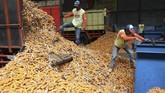 Direktur Pakan Dirjen Peternakan dan Kesehatan Hewan Kementan Sri Widayanti menuturkan bahwa produk pakan ternak tahun ini diperkirakan mencapai 19,4 juta ton atau meningkat 6,59 persen dibanding produksi tahun lalu. Namun, khusus jagung, permintaannya menurut jadi 7,8 juta pada tahun ini.(ANTARA FOTO/Prasetia Fauzani).