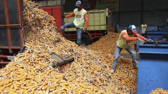 Kantongi Izin, Bulog Siap Sebar 30 Ribu Ton Jagung Impor