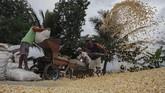 Parjuni merinci setiap harinya, kebutuhan jagung di Jawa Tengah bagi peternak dan produsen pakan mencapai 3.000 - 3.250 ton. Dari jumlah itu, produsen pakan ternak mendominasi kebutuhan sekitar 70 persen.(ANTARA FOTO/Idhad Zakaria).