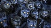 Rombongan serigala yang kerasukan arwah jahat, menjadi salah satu peserta parade Halloween di Galway, Irlandia. (REUTERS/Clodagh Kilcoyne)