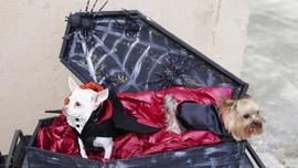 FOTO: Lolong 'Gemas' dalam Halloween