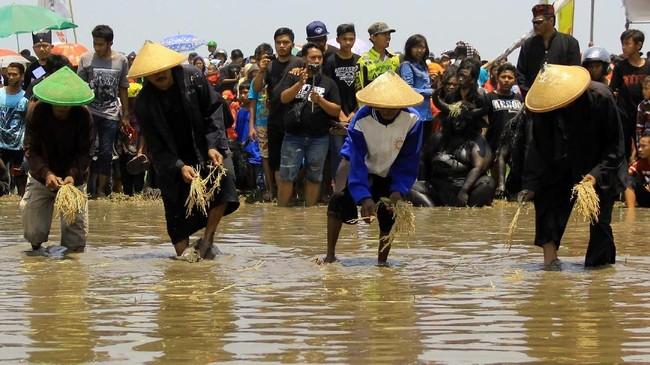 Petani menaburkan bibit padi di sawah sebagai tahapan ritual adat Kebo-keboan di Alasmalang, Banyuwangi. (ANTARA FOTO/Budi Candra)