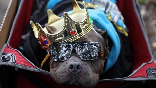 Tak hanya rakyat jelata, 'raja' pun turut merayakan parade yang penuh lolong ini. (REUTERS/Kevin Coombs)