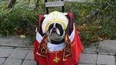 Seekor anjing terlihat mengenakan jubah dalam acara tahunan parade Halloween untuk anjing, di Tompkins Square, New York, Amerika Serikat. (AFP/ TIMOTHY A. CLARY)