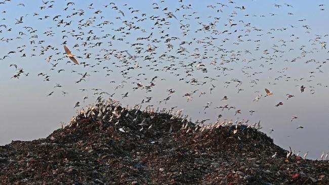 Tumpukan sampah yang menghasilkan gas tersebut kemudian dimanfaatkan menjadi energi listrik.TPA ini menerima sampah sekitar 1.000 hingga 2.000 ton sampah per hari. (ANTARA FOTO/Zabur Karuru)
