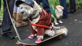 Kehidupan skater juga menjadi sorotan dalam parade yang diikuti oleh ratusan anjing ini. (REUTERS/Kevin Coombs)