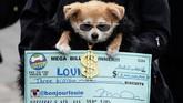 Anjing ini bersolek layaknya milioner, lengkap dengan kalung emas dan cek berjumlah fantastis. (REUTERS/Carlo Allegri)