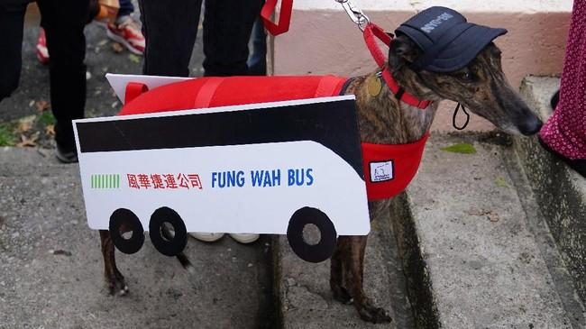 Bahkan lebih gilanya lagi, ada juga anjing yang didandani layaknya sebuah bus. (REUTERS/Carlo Allegri)