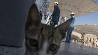 FOTO: Ziarah ke Makam Nabi Muhammad