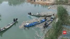 VIDEO: Ribuan Ikan Mas di Irak Diduga Mati Keracunan