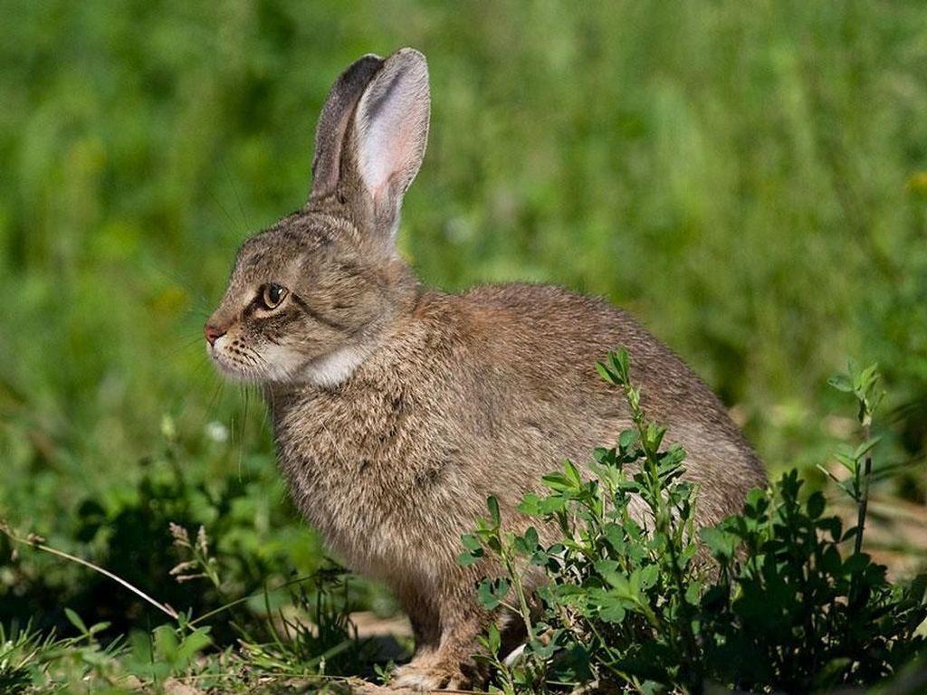 Ketika punya telinga panjang seperti kelinci.(Foto: Boredpanda)