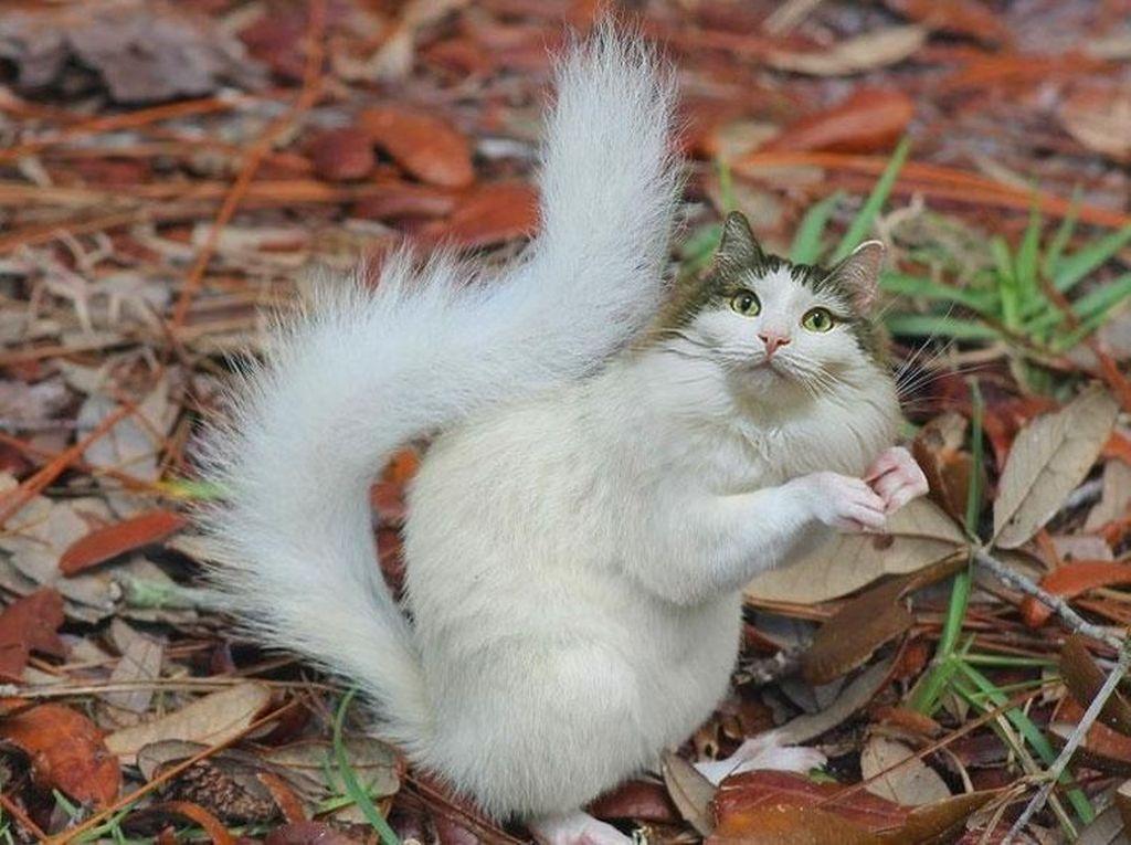 Kucing berbadan tupai. (Foto: Boredpanda)