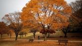 Mayoritas pepohonan di Seoul saat musim gugur akan didominasi warna jingga atau merah.