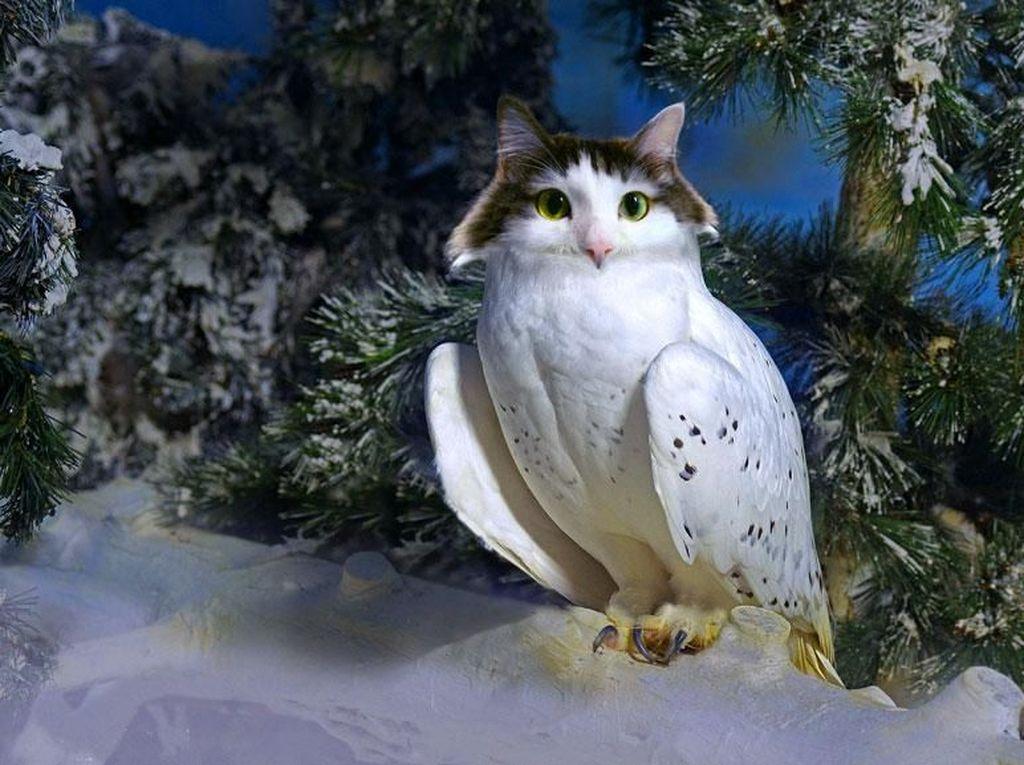 Perpaduan kucing dengan burung hantu. (Foto: Boredpanda)