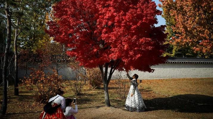 Mengintip Romantisnya Musim Gugur di Korea Selatan