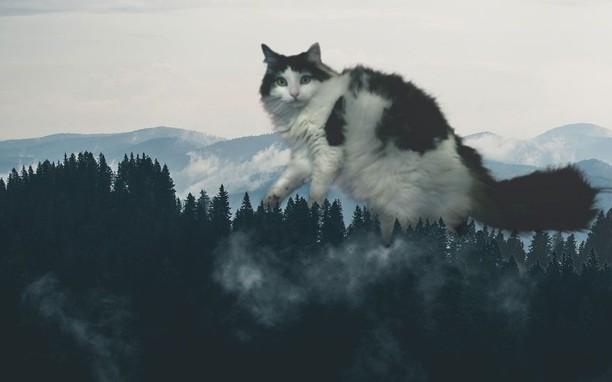 Kocak! Kombinasi Wajah Kucing dengan Tubuh Hewan Lain